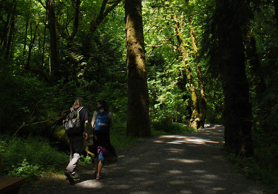 11 Beautiful Vancouver Hiking Trails to Explore